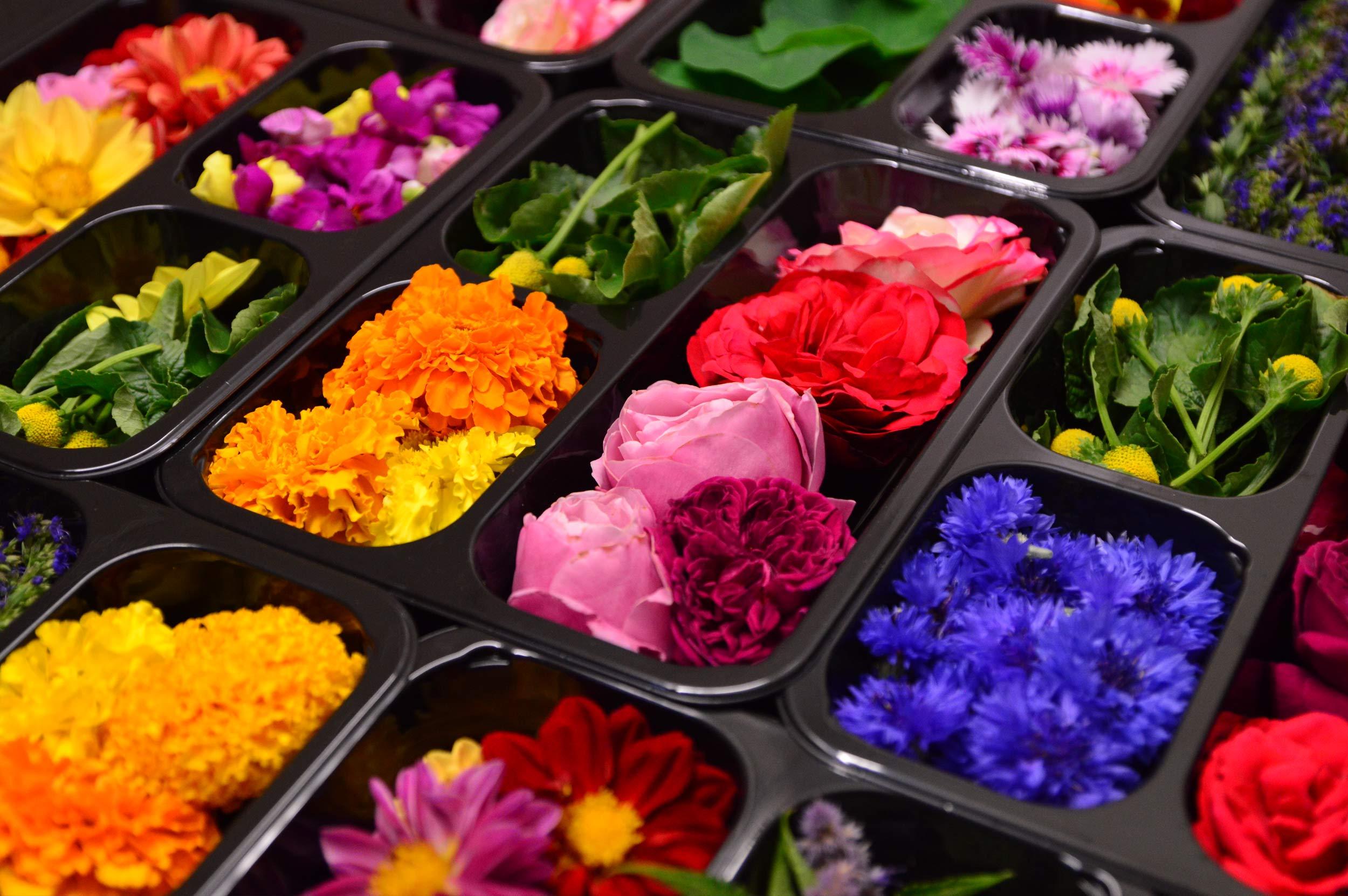 Fiori E Piante Commestibili fiori eduli commestibili erbe aromatiche - fattoria delle erbe