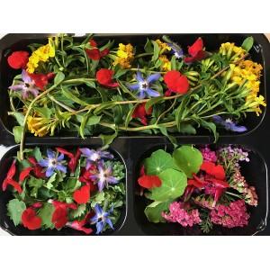 Fiori eduli - Erbe aromatiche - Misticanza